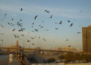 Karachi Crows in Flight